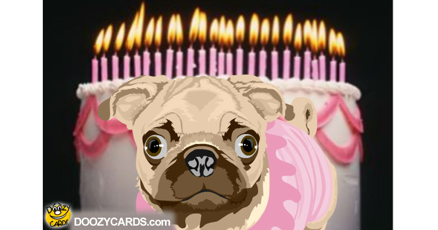 Talking Birthday Pug E Card View The Popular Talking Birthday Pug E