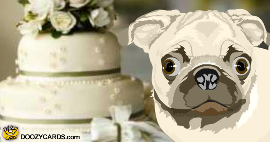 Talking Wedding-Annivesary Pug