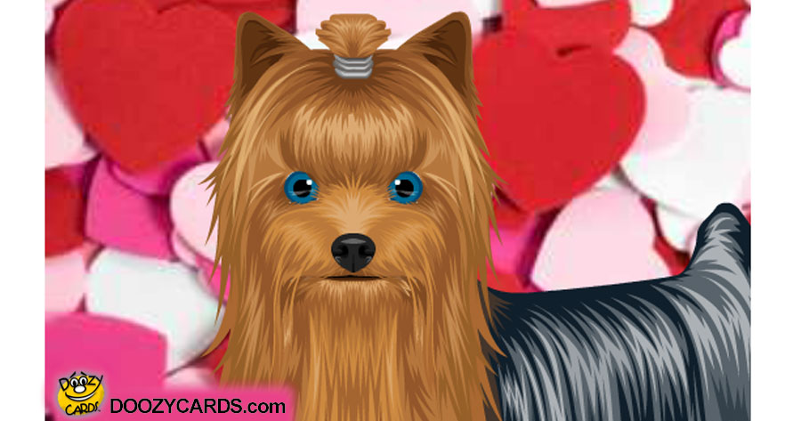 Talking Love Yorkie