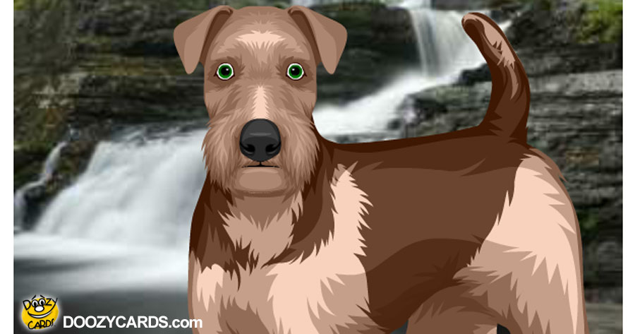 Talking Terrier at Waterfall