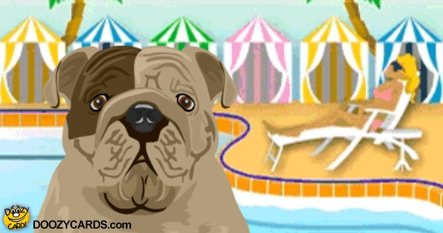 Talking Bulldog by the Pool