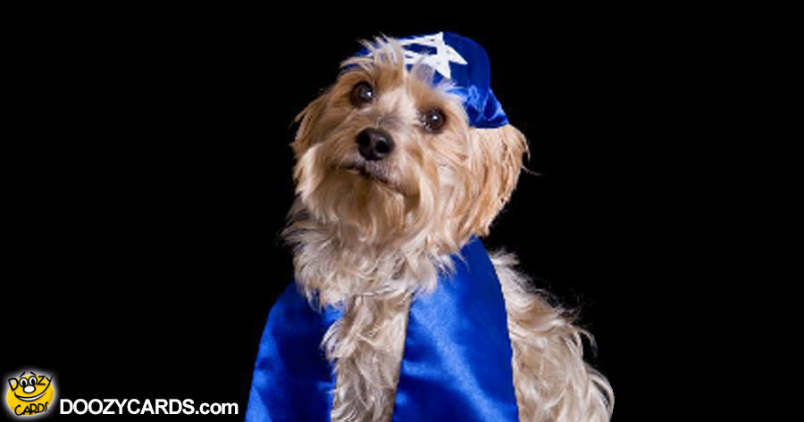 Rabbi Doggy