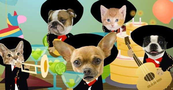 Happy Birthday Mariachi ECard With Singing Dogs Cats
