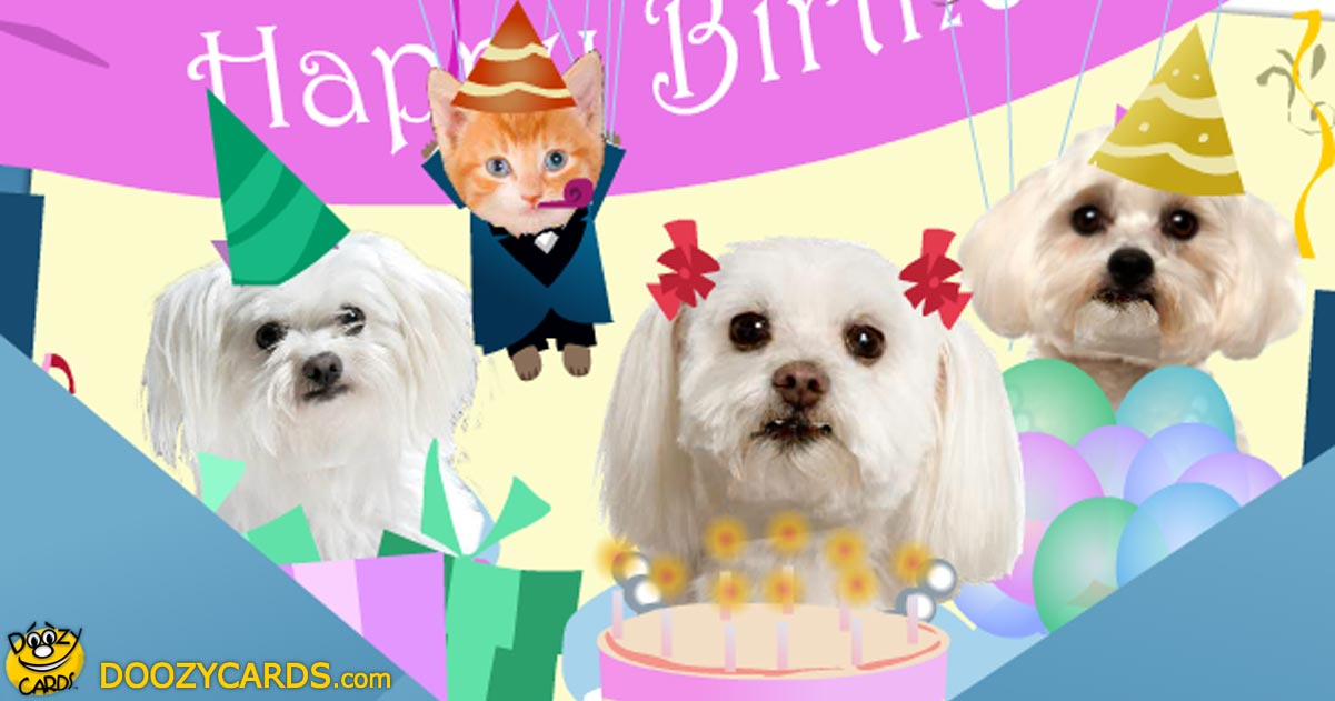 Birthday Greetings with Dogs – Doozy Cards Birthday