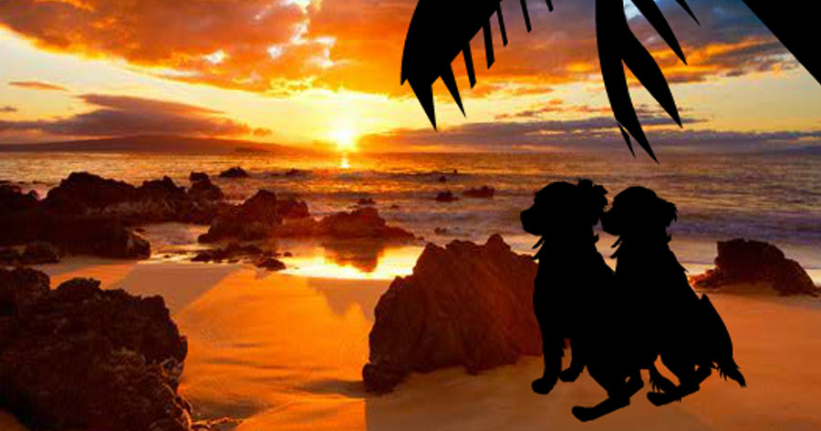 Hawaiian Puppy Romance