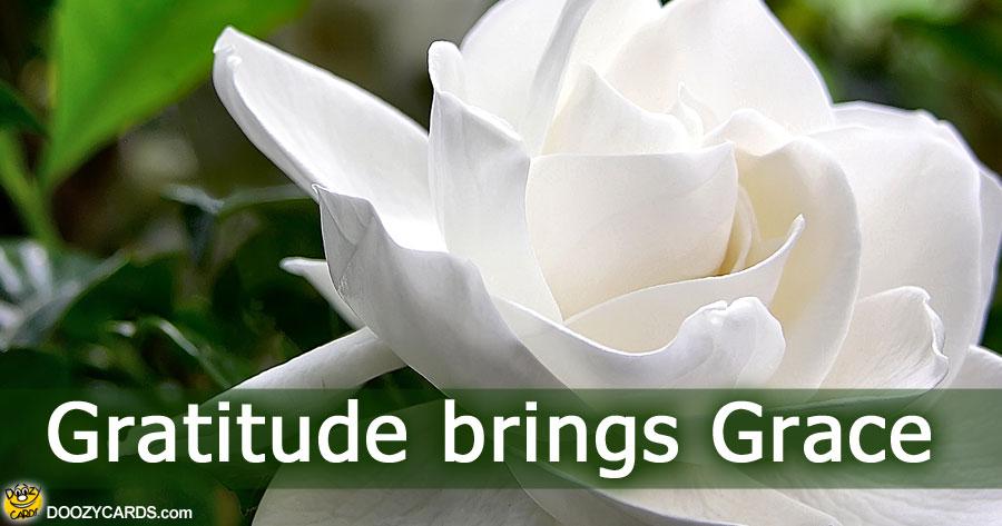Gratitude Brings Grace